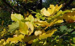 ogrod-jesienny-2005