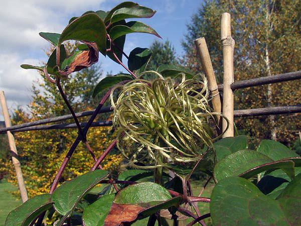 2009-jesień_4